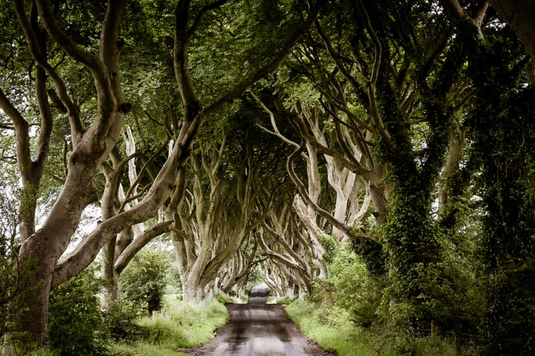 Game of Thrones The Dark Hedges_The Kingsroad