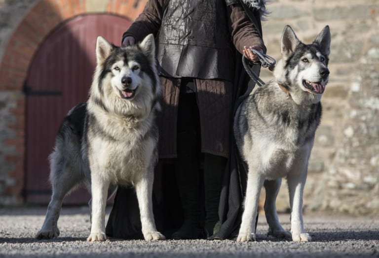 Game of Thrones Meet the Direwolves